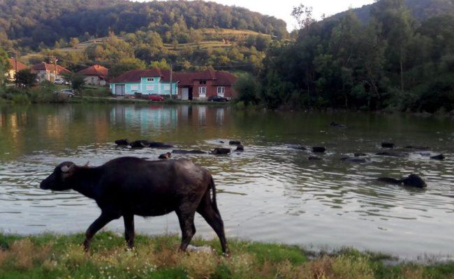 printre-dealuri-si-coline-colesti-2016-2